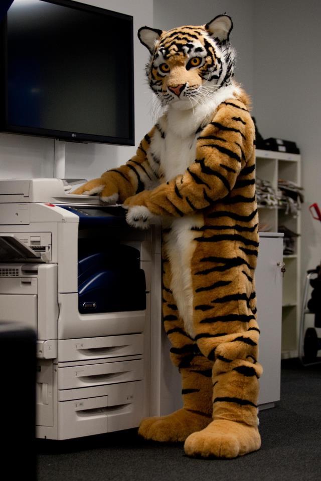 Tigerofficecopy